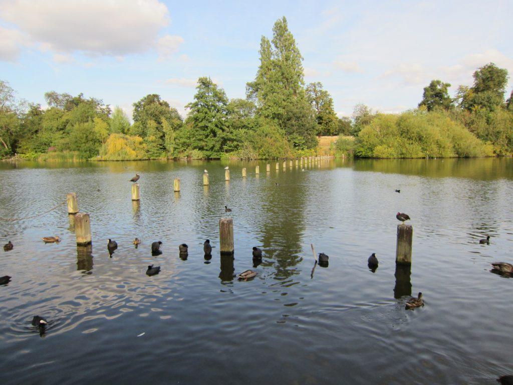 Andy Corby - Hyde Park - River Birds